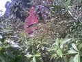 Kirinda Pulwella 2011 - panoramio.jpg
