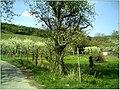 Kirschblüte - panoramio (6).jpg