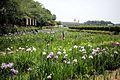 Kitagatako Floral iris garden.jpg