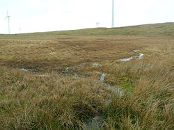 Knockewart Loch - old loch bed.JPG