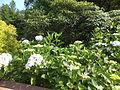 Kobe Municipal Arboretum in 2013-6-22 No,37.JPG