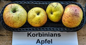 Korbinian Aigner - Apple variety KZ-3, named in honor of Korbinian Aigner