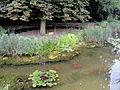 Koreanischer Garten (Grüneburgpark) - DSC01604.JPG