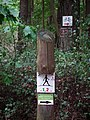 Kowanowko forests, gm. Oborniki (3).JPG