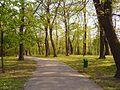Krakow-Park Bednarskiego.jpg