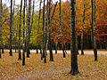Kyiv Sovky Park16.JPG