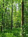 Landschaftsschutzgebiet Gestorfer Lößhügel (10).JPG