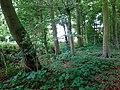 Landschaftsschutzgebiet Warmenau-Ufer LSG OS 00019 Datei 12.jpg