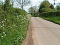 Lane near Whimple - geograph.org.uk - 1284406.jpg