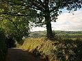 Lane to Bathealton - geograph.org.uk - 1521891.jpg