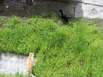 Largo di Torre Argentina cats 6.jpg