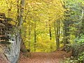 Laubenwald in Niederpruemtal (Deciduous Woodland in the Lower Prum Valley) - geo.hlipp.de - 14728.jpg