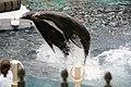 Leaping (509190916).jpg