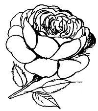 Lear 2 - Rose-small.jpg