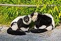 Lemur (23647841788).jpg