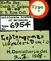 Leptomyrmex fragilis castype06954-01 label 1.jpg
