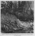 """Les merveilles de l'industrie, 1873 """"Combustion du bois et des branchanges...."""" (4618584050).jpg"""