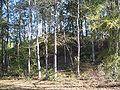 Letchworth Mounds09.jpg