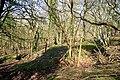 Limestone pits, Darwell Wood - geograph.org.uk - 385659.jpg