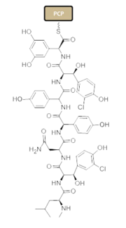 Figure 2: Linear heptapeptide which consists of modified aromatic rings