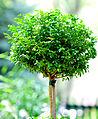 Little Tree (2686037824).jpg