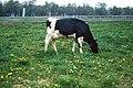 Livestock26.tif (37987960705).jpg