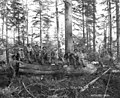 Loggers in the woods, Goodyear Logging Company, near Clallam Bay, ca 1920 (KINSEY 2062).jpeg