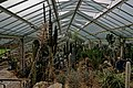 London - Kew Gardens - Princess of Wales Conservatory 1987- Ten Climatic Zones V.jpg