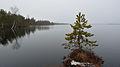 Loosalu järv1.jpg