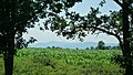Lukovit, Bulgaria - panoramio (26).jpg