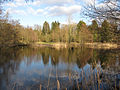 Lynford Arboretum lake - geograph.org.uk - 1741606.jpg