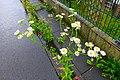 Mühlenweg (Odenthal). Reader-09.jpg