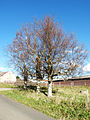 Měděnec, stromy na začátku obce 01.jpg