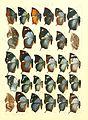 Macrolepidoptera15seit 0259.jpg
