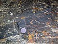 Magnetite-rich banded iron-formation (BIF) (Michipicoten Iron-Formation, Neoarchean, 2696-2749 Ma; Route 17 roadcut east of Bridget Lake, south of Wawa, Ontario, Canada) 3 (48268766362).jpg