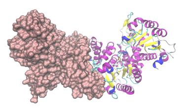 NADP-abhängiges Malatenzym - Wikipedia
