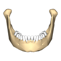 Mandible close-up anterior.png