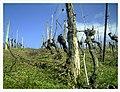 March Denzlingen - Master Season Rhine Valley Photography - panoramio (5).jpg