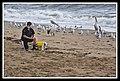 Margate Pelican Rescue- Hammy-07 (6807926900).jpg
