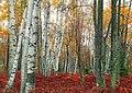 Marion Brooks Natural Area (Revisit) (2) (10127339804).jpg