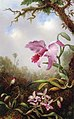 Martin Johnson Heade - Hummingbird and Two Types of Orchids (15008884825).jpg