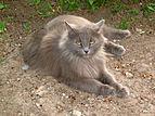 May cat.JPG