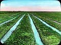 Meadows in Imperial Valley, California (3654948889).jpg