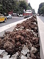 Median Verge - Jawaharlal Nehru Road - Kolkata 2011-09-08 00536.jpg