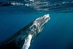 Banco de la Plata y la Navidad marine mammal sanctuary