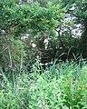 Mere near Fir Tree Farm - geograph.org.uk - 193888.jpg