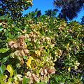 Miami Beach - Sand Dunes Flora - Green Plants and Bushes 03.jpg