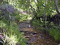 Michaud Creek - panoramio.jpg