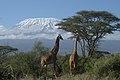Misungwi, Tanzania - panoramio.jpg