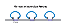 Molecular inversion probes